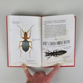 The Beetle Collector's Handbook - M.G. Leonard