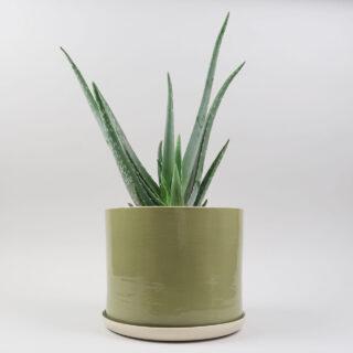 Planter by Brickett Davda - Leaf