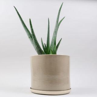 Planter by Brickett Davda - Oat
