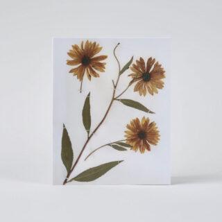 Herbaria Notecards