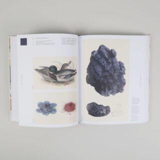 Nature's Palette - Patrick Baty