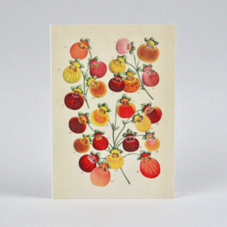 Pattern Book Greeting Cards
